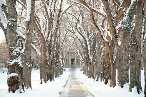 Colorado State walkway